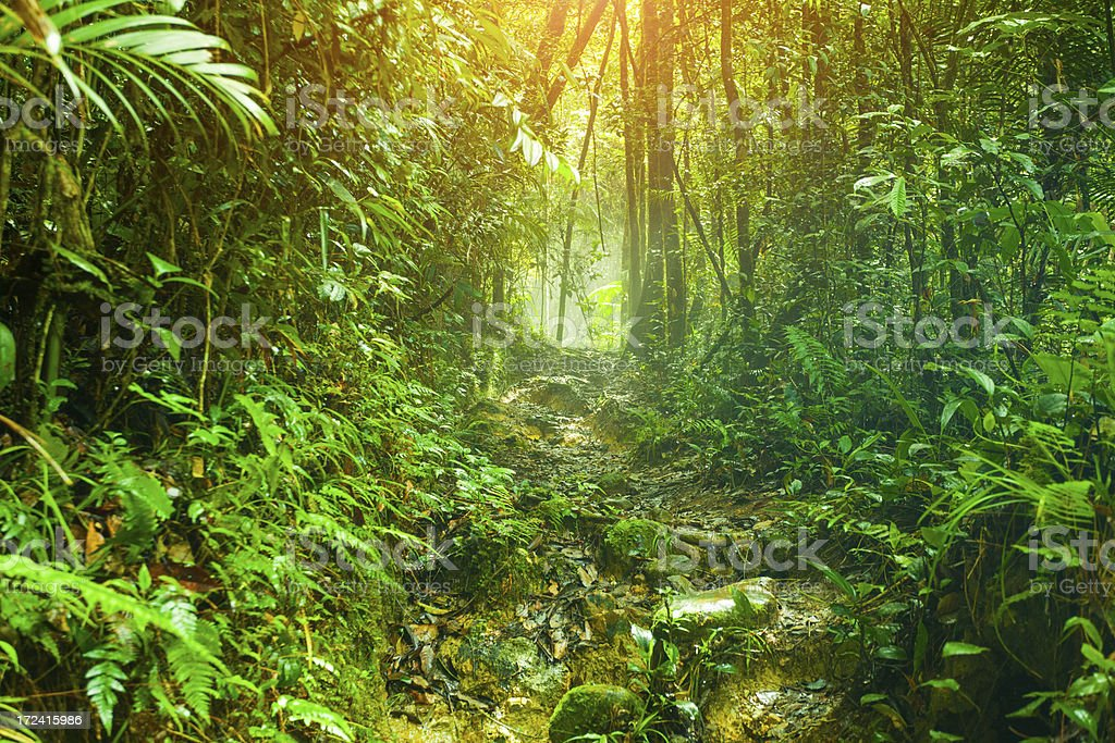 Footpath in the Rainforest stock photo