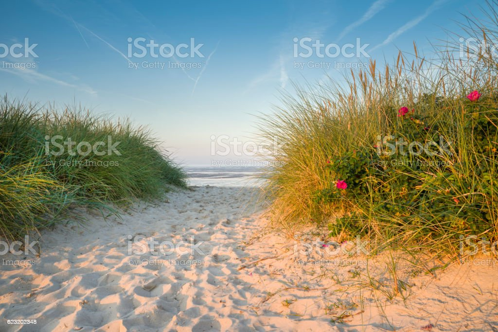 Footpath in the sand dunes at the wadden sea stock photo