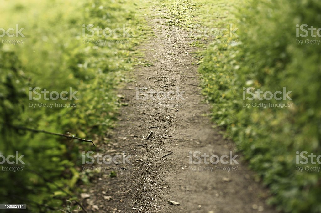 Footpath in the woods stock photo