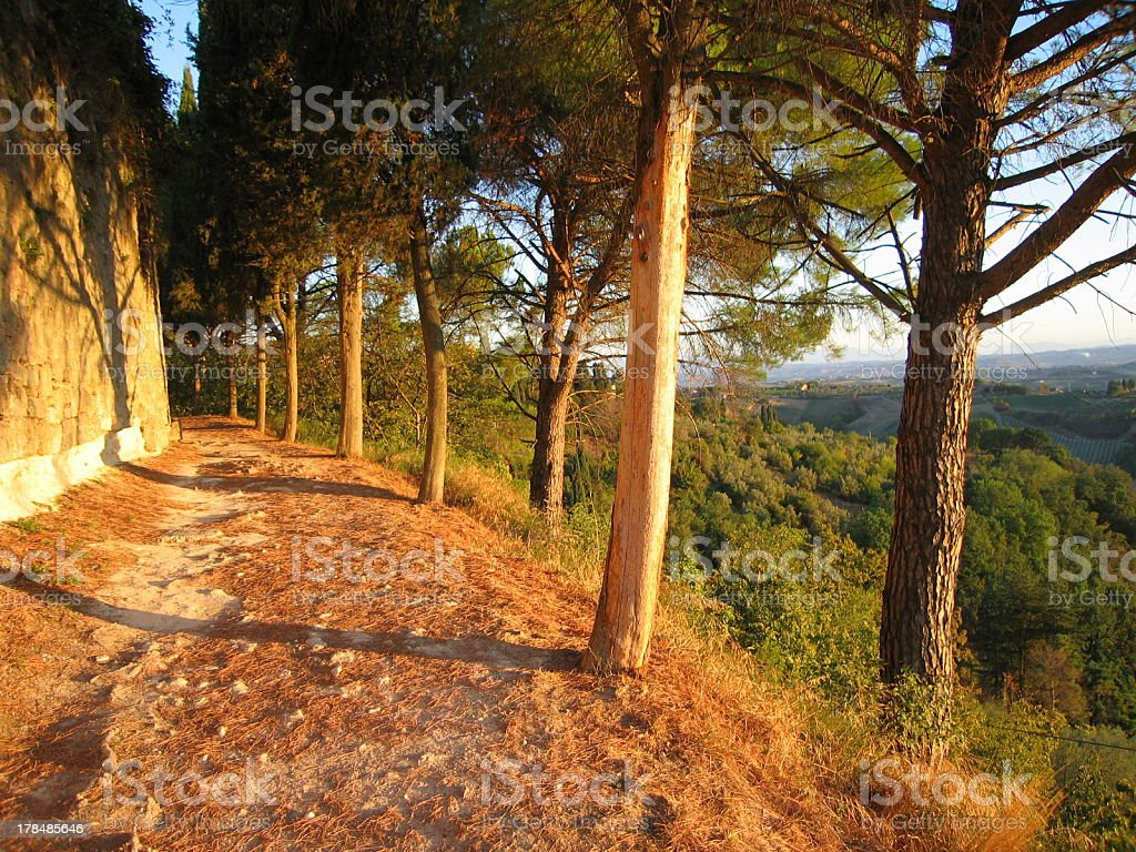 Footpath in Tuscan sunrise 3 royalty-free stock photo