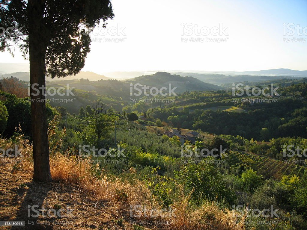 Footpath in Tuscan sunrise 5 royalty-free stock photo