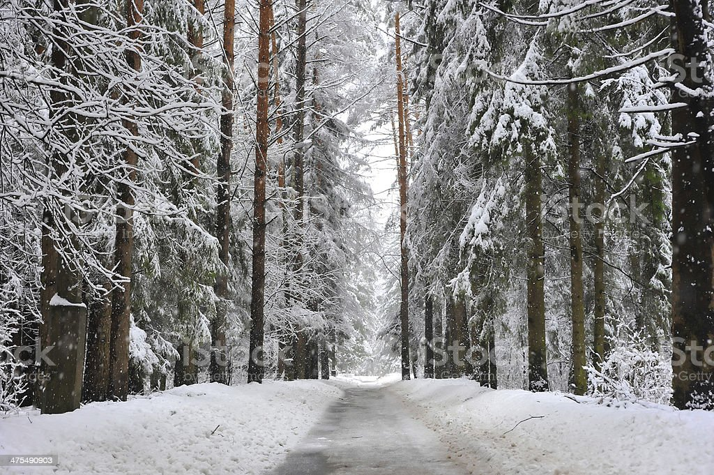 footpath in winter snowy forest stock photo