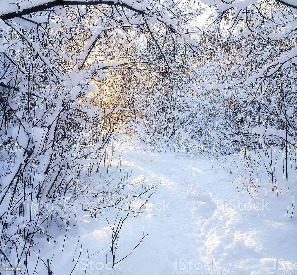 Footpath in winter wood. royalty-free stock photo