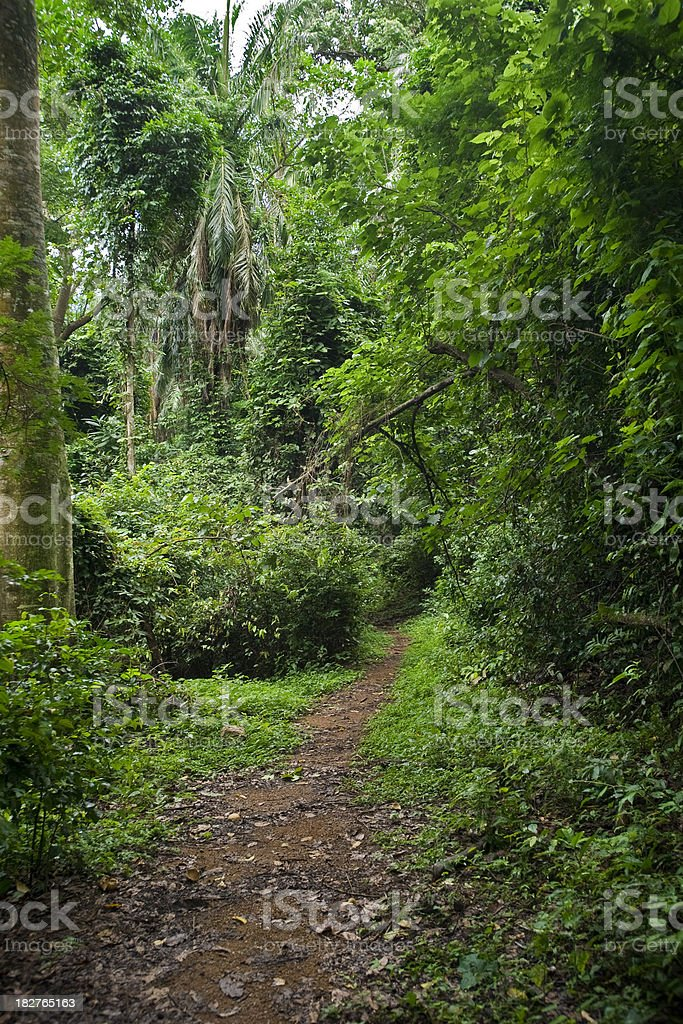 footpath (track) into the green African jungle royalty-free stock photo