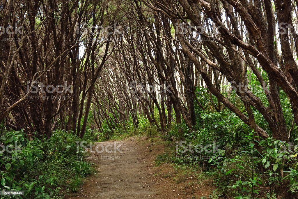 Footpath leading trough a forest in New Zealand stock photo