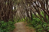 Footpath leading trough a forest in New Zealand