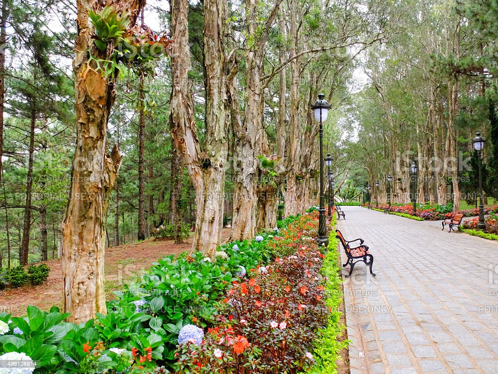 footpath leads to museum in the pine forest stock photo