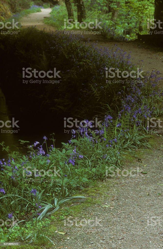 Footpath Luxulyan Valley stock photo