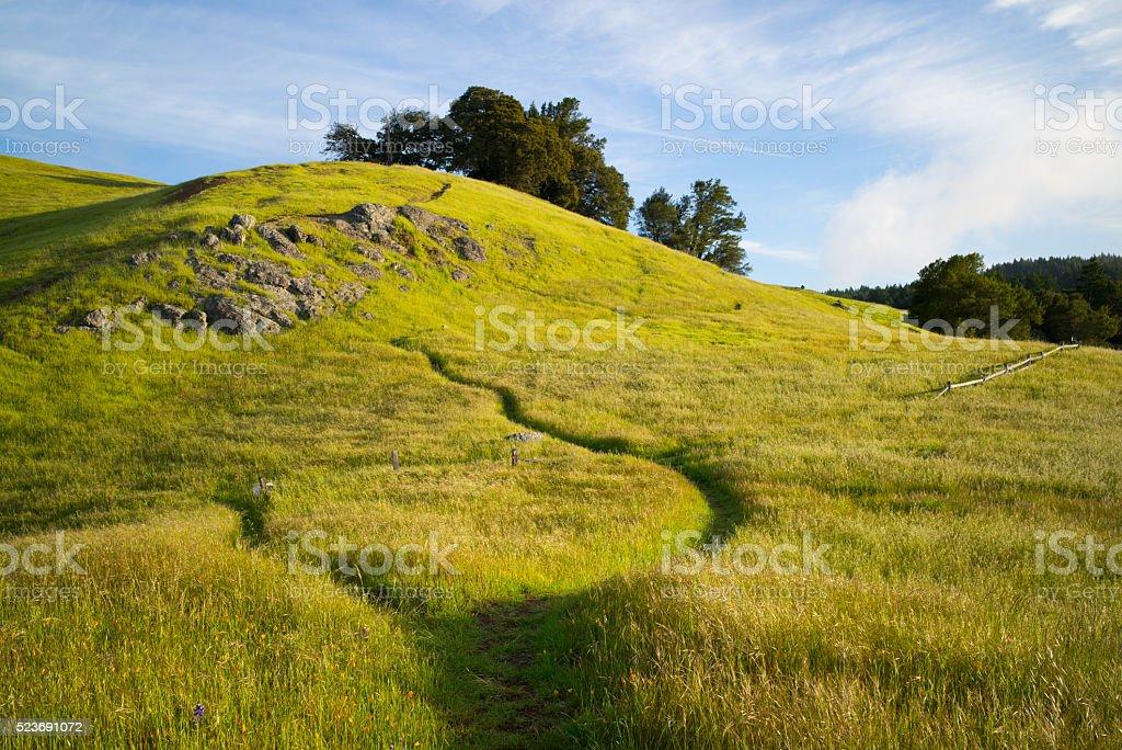 Footpath on Mt. Tamalpais stock photo