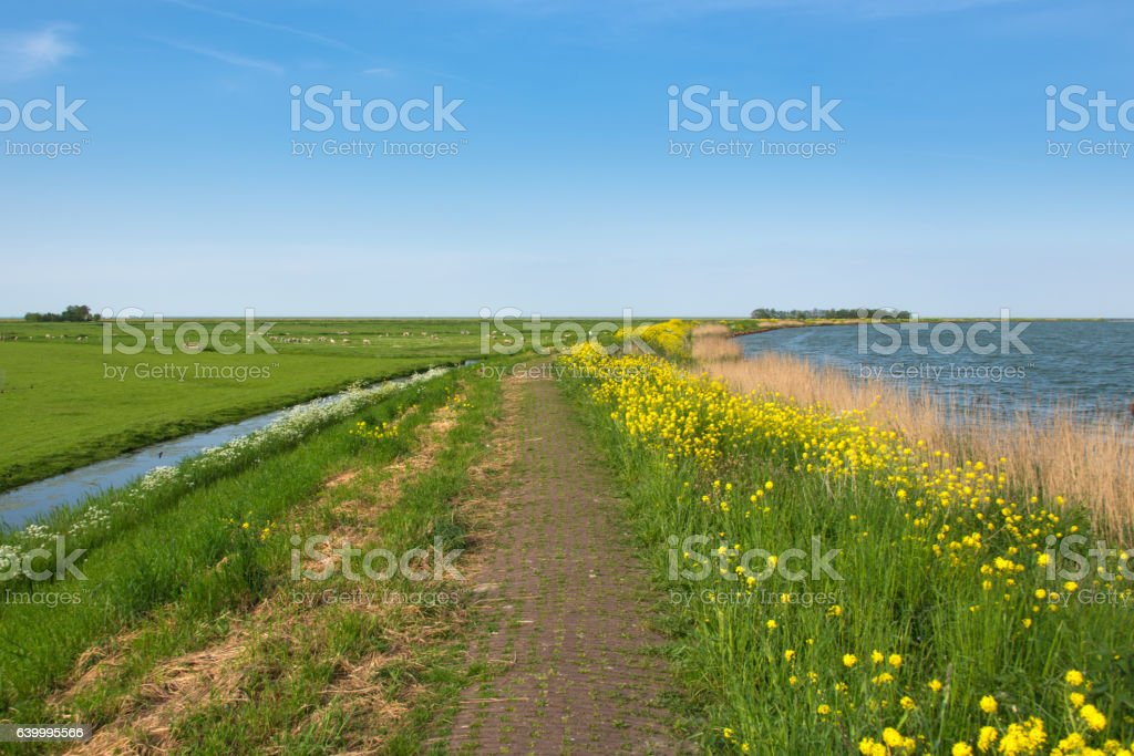 Footpath over the dyke in the polder stock photo