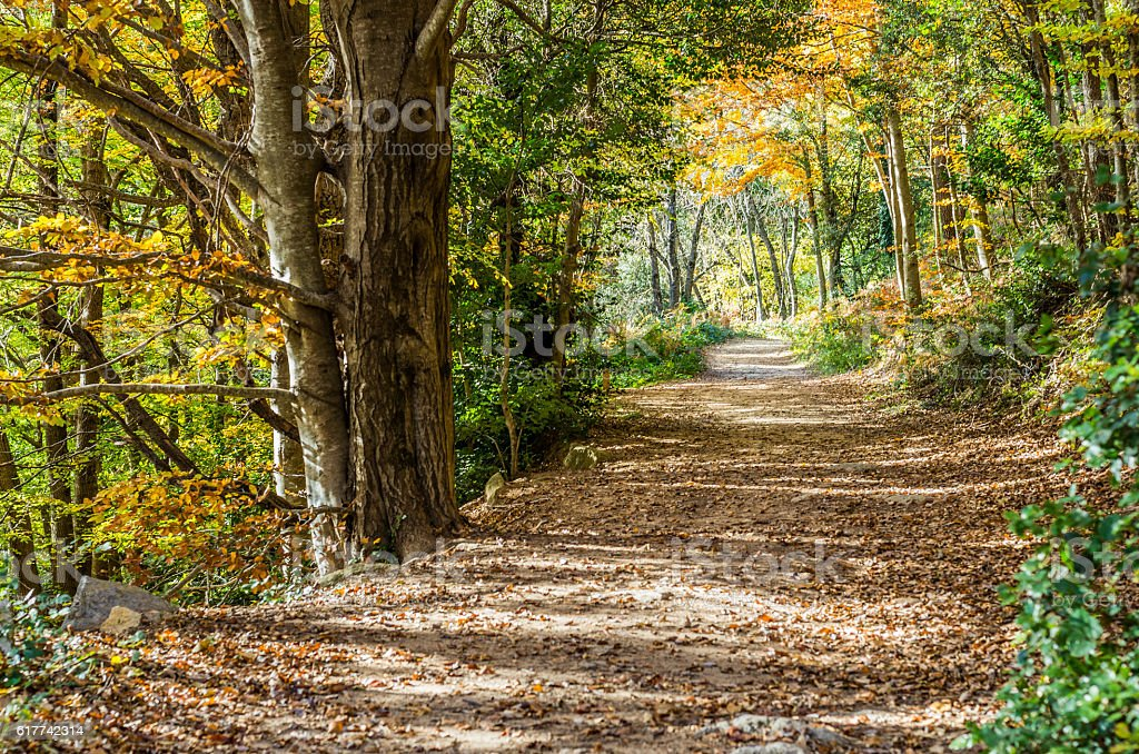 footpath path montseny mountain horizontal day autumn myth stock photo