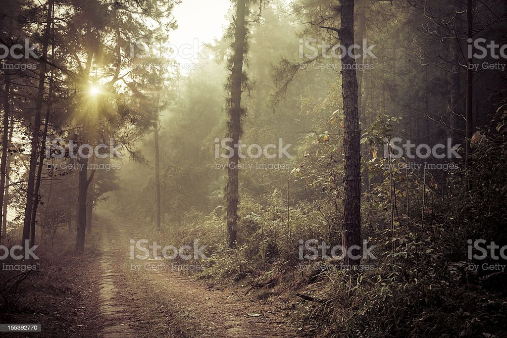 footpath royalty-free stock photo