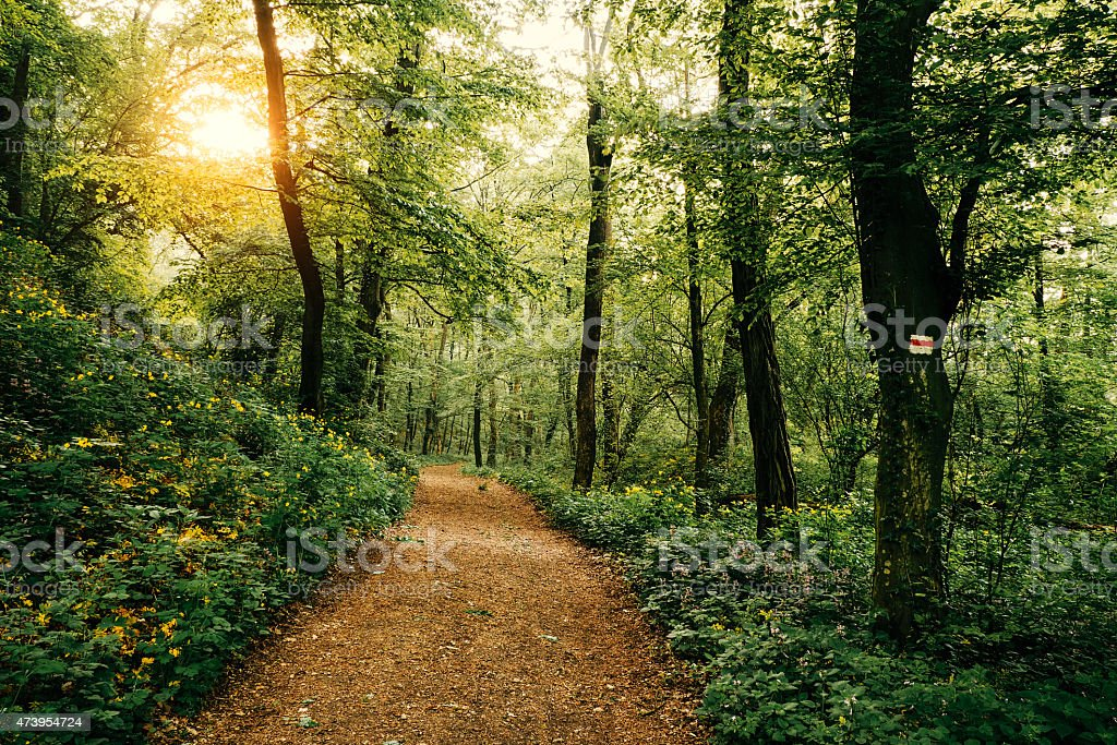 A footpath through a forest with sunshine stock photo