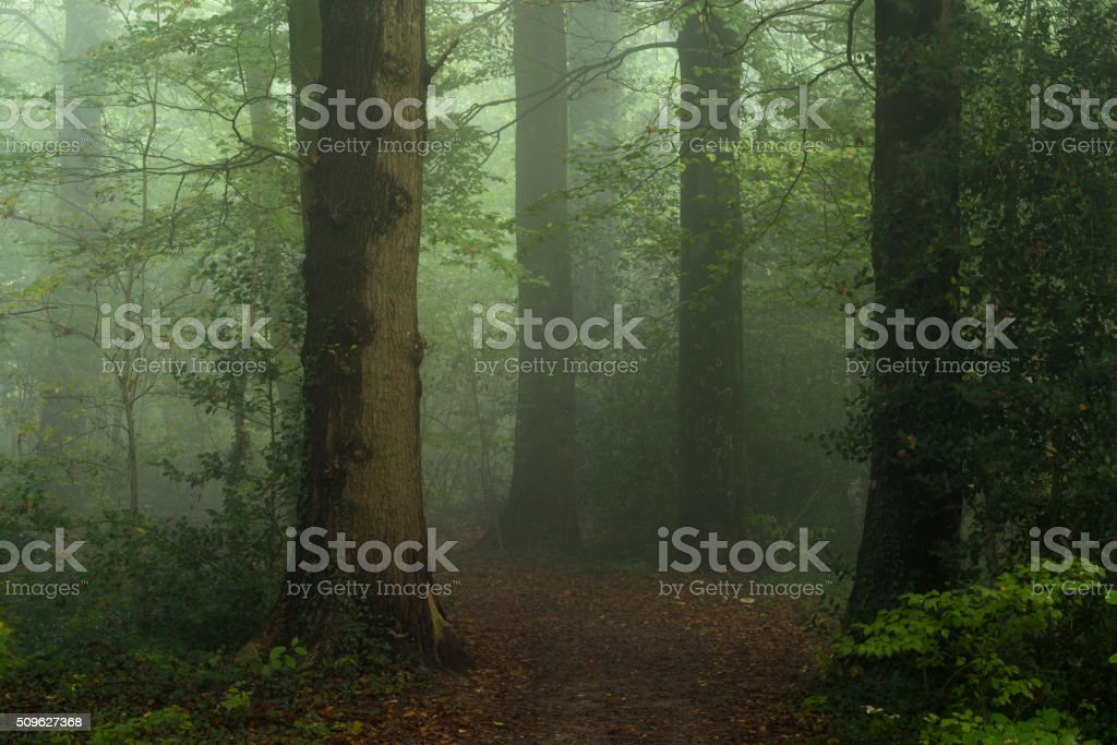 Footpath through dark and foggy forest stock photo