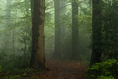 Footpath through dark and foggy forest