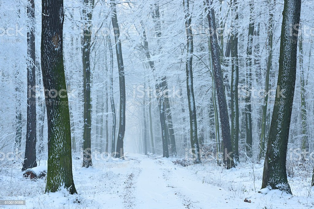 Footpath through Forest covered by Snow and Ice stock photo