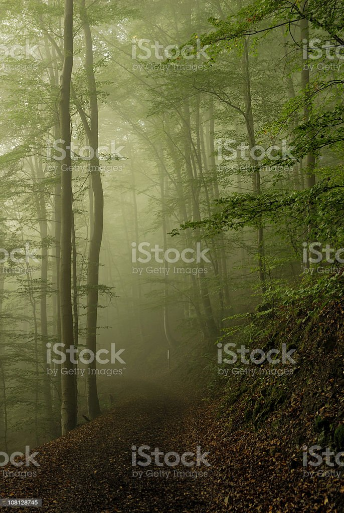 Footpath through Forest in Morning Fog royalty-free stock photo
