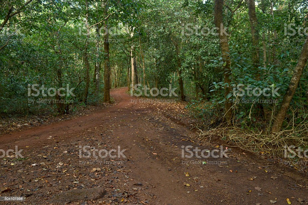 Footpath through mixed forest stock photo