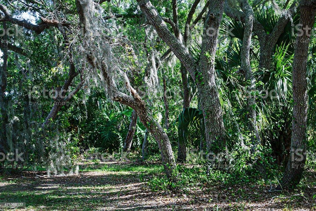 Footpath through the flatwoods of savanna stock photo