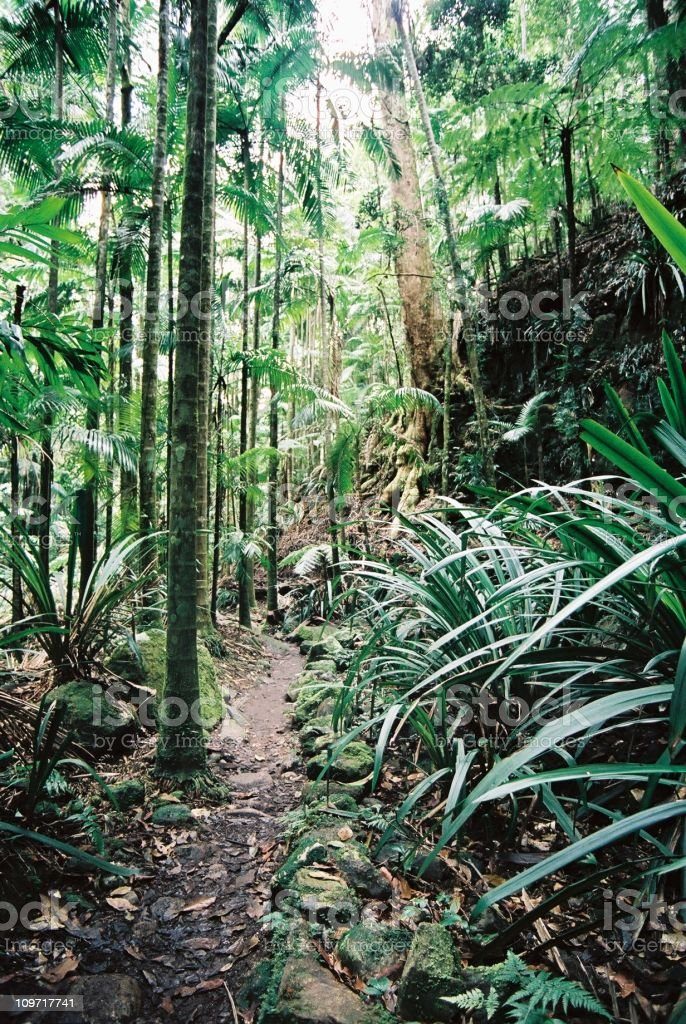 Footpath Through Tropical Rainforest royalty-free stock photo