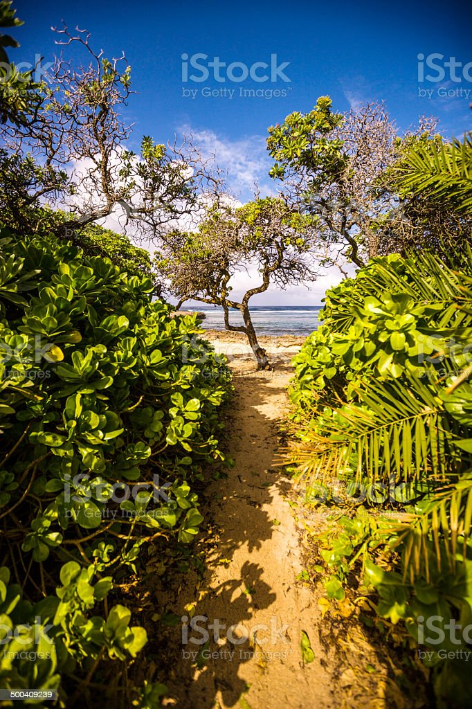 Footpath to the beach, Oahu, North shore, Hawaii royalty-free stock photo