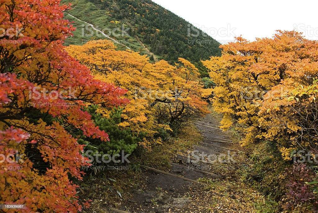 Footpath trail in Autumn stock photo