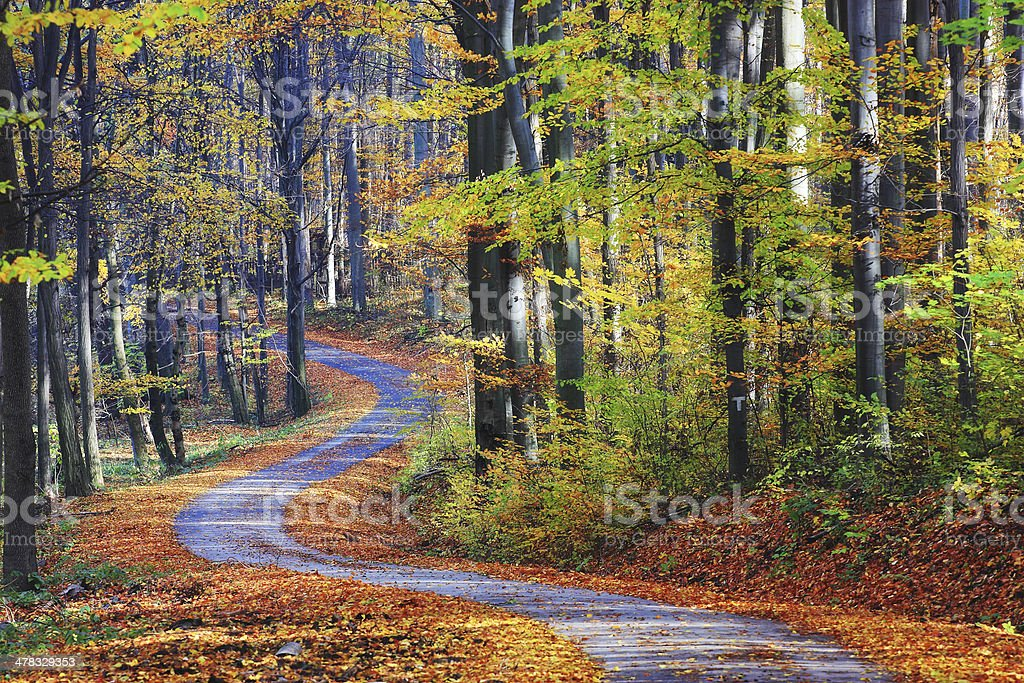 Footpath winding through colorful forest stock photo