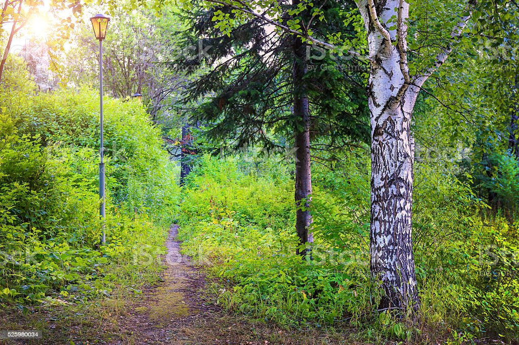 footpath with a lamp in the beautiful wood stock photo