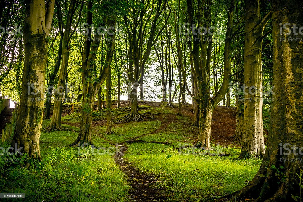Footpath_in_forest stock photo