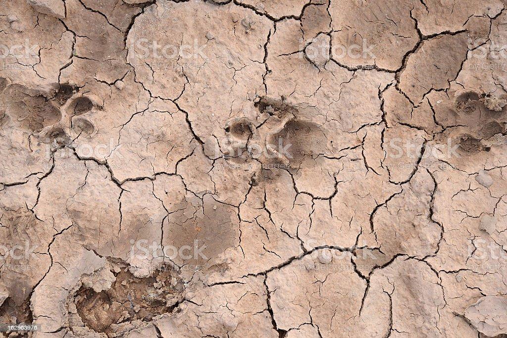 footprint of animals royalty-free stock photo