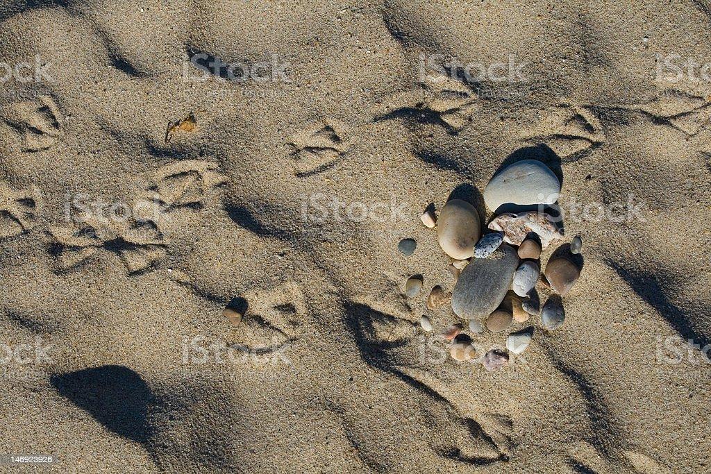 Footprint of gull stock photo