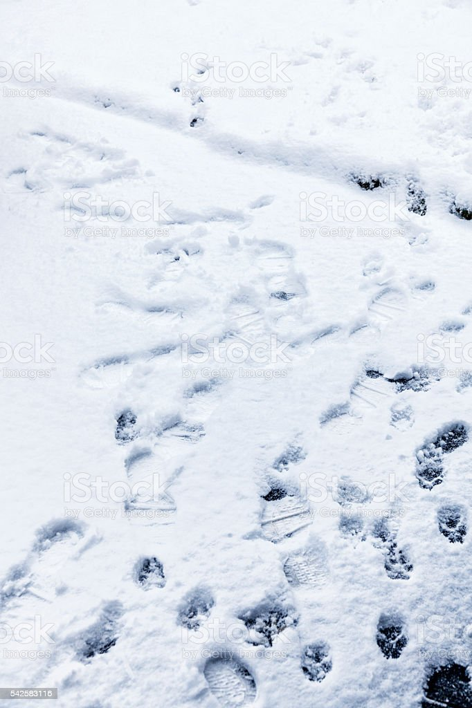 Footprints And Dog Paw Print Winter Snow Driveway Tracks stock photo