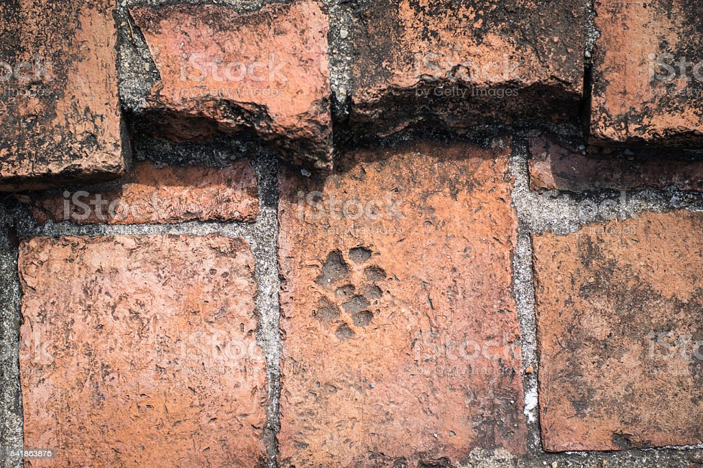 Footprints cat stock photo