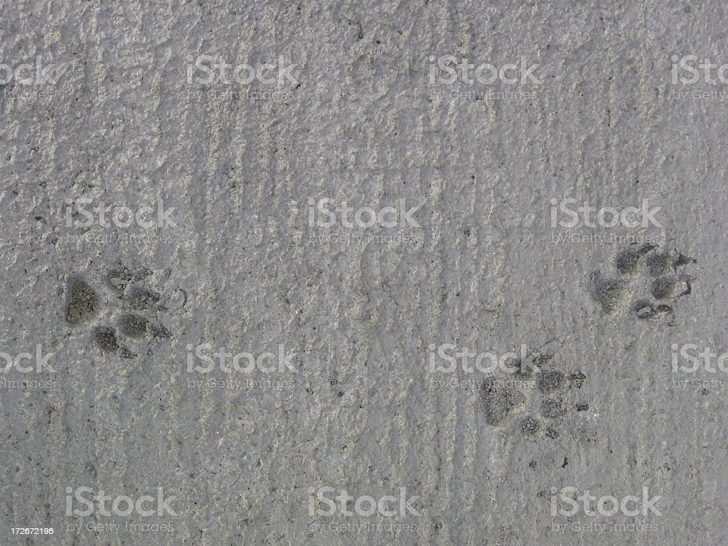 Footprints - Dogs in concrete royalty-free stock photo