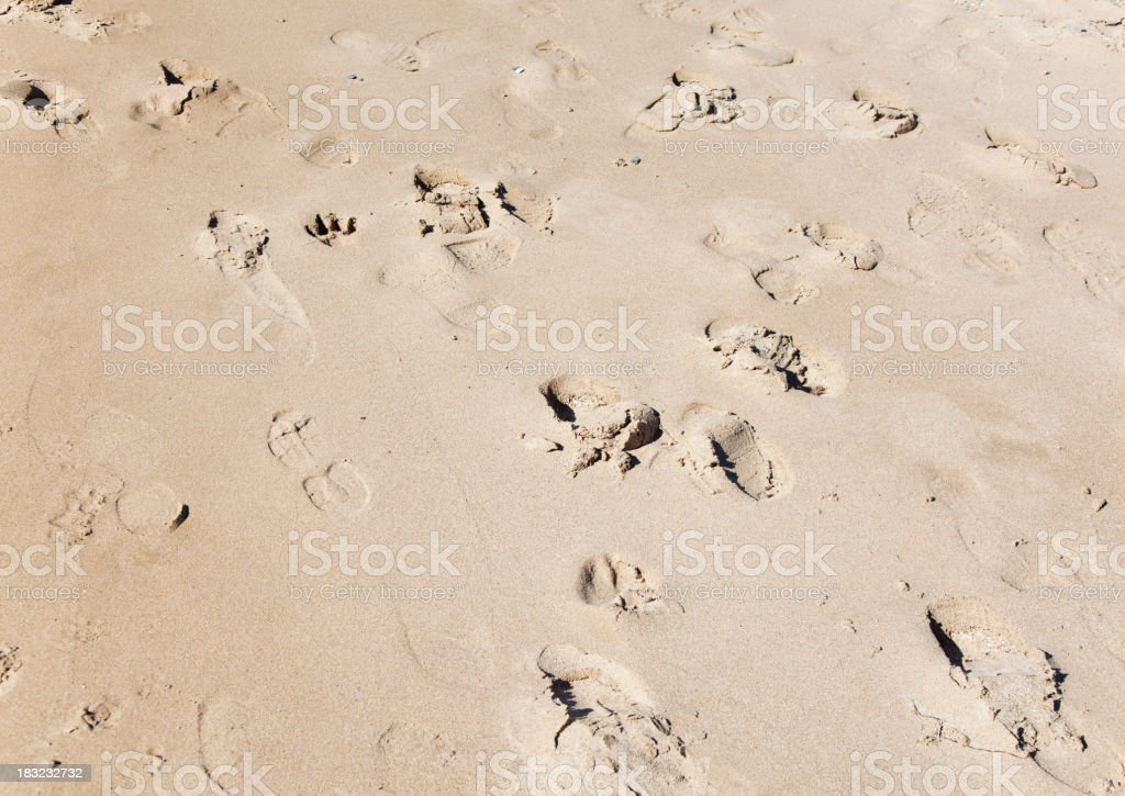 Footprints from people and dogs in the sand. royalty-free stock photo