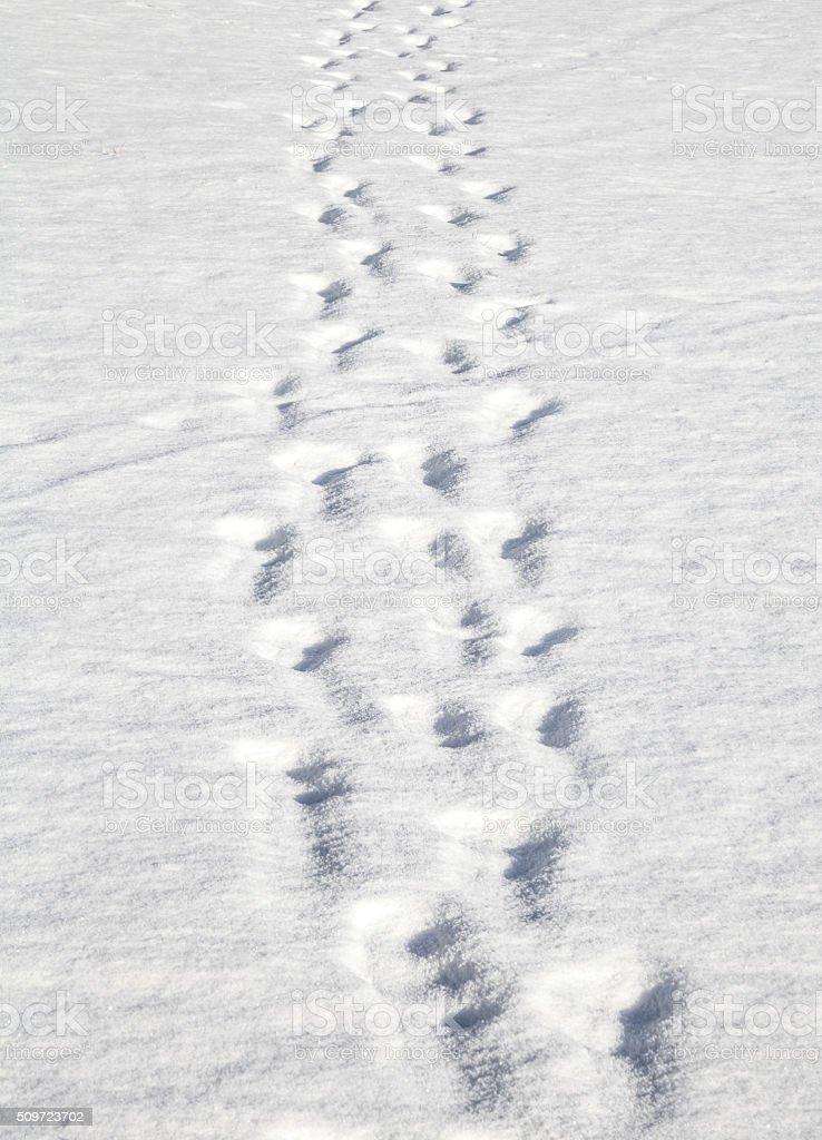 Footprints in Deep Snow stock photo