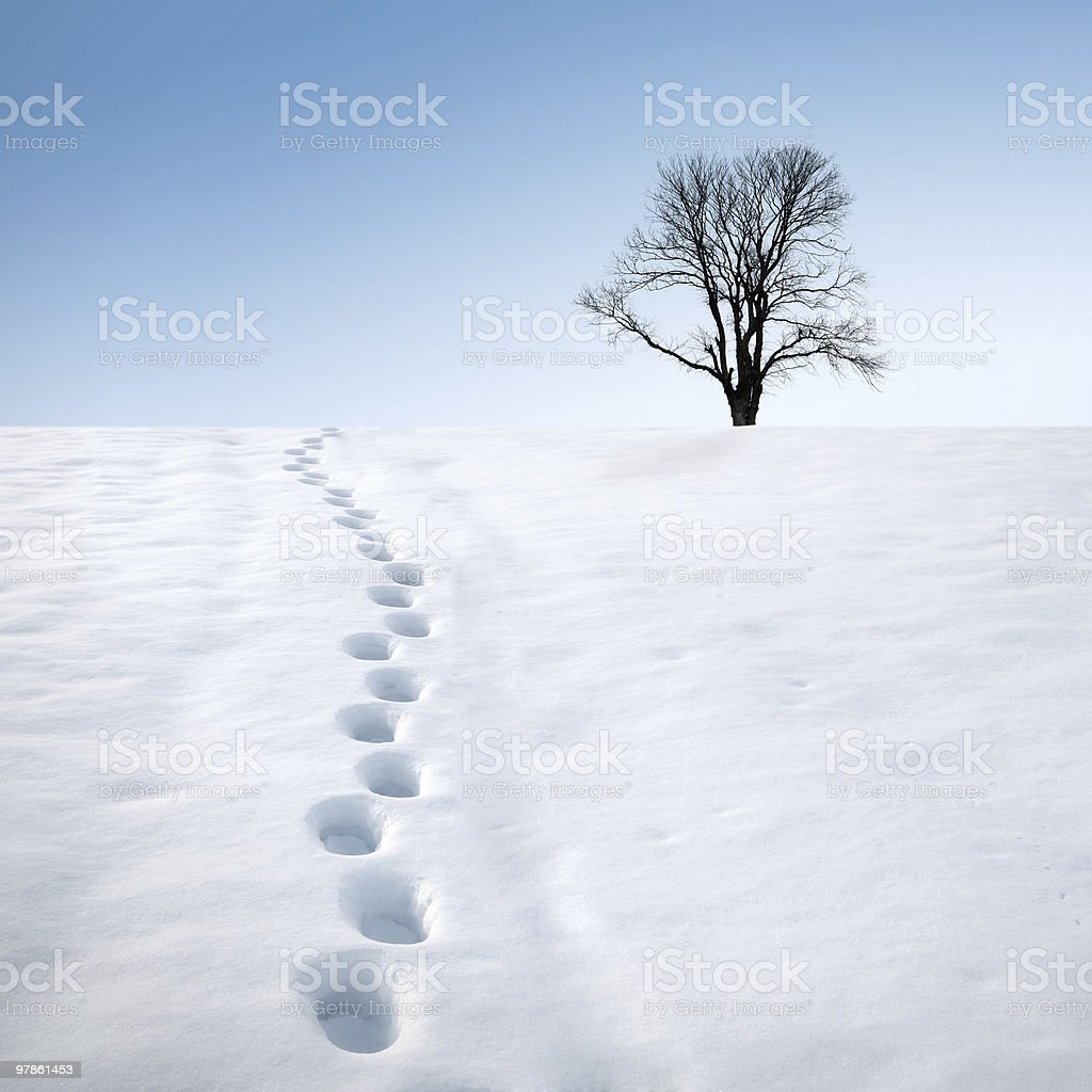 footprints in snow and tree stock photo