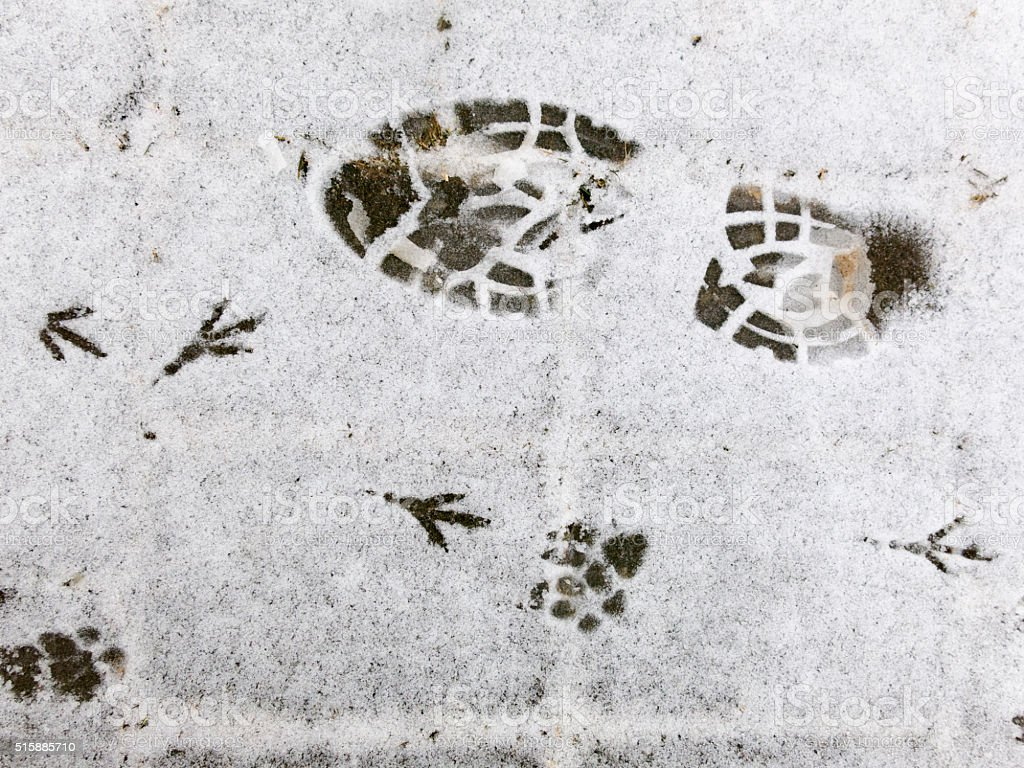 Footprints in snow stock photo