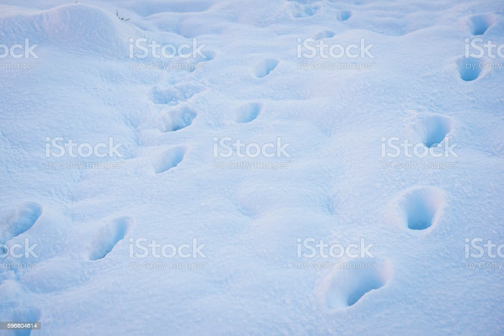 Footprints in snow stock photo