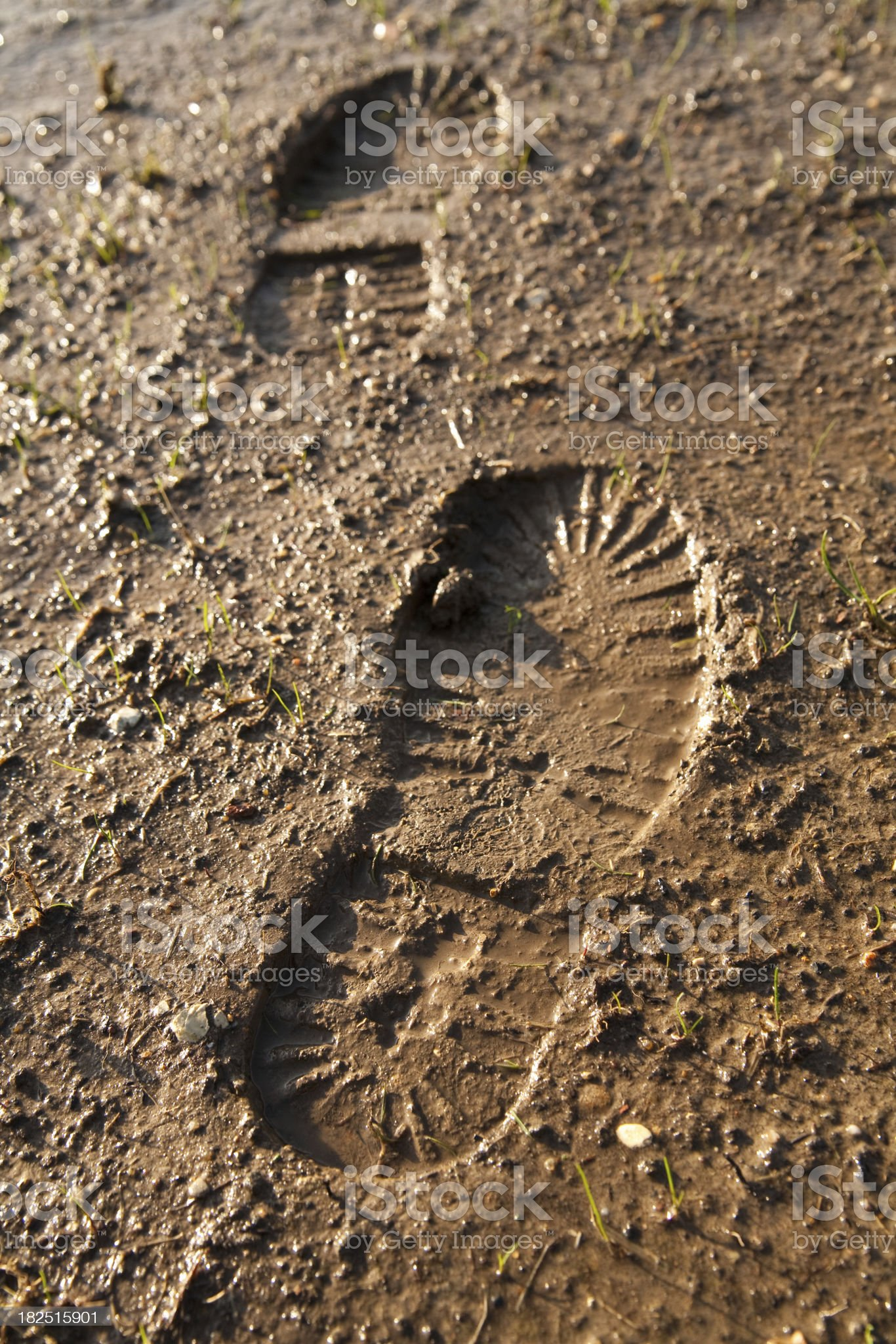 Footprints in the mud royalty-free stock photo