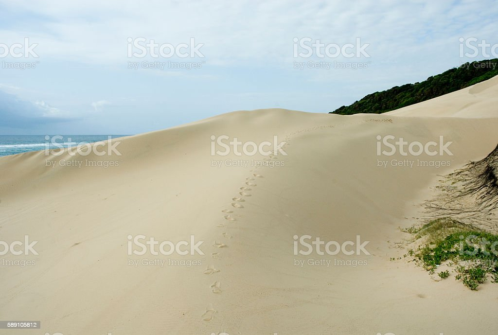 footprints in the sand, coastal dunes, south africa stock photo