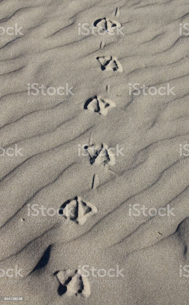 Footprints In The Sand stock photo