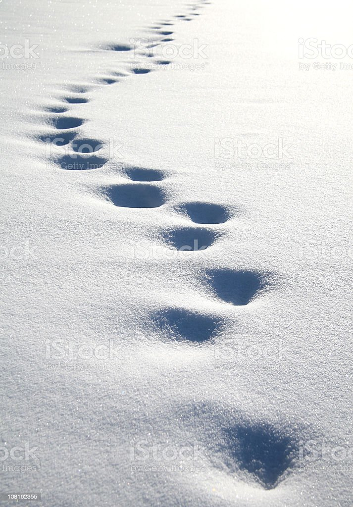 Footprints in the Snow royalty-free stock photo