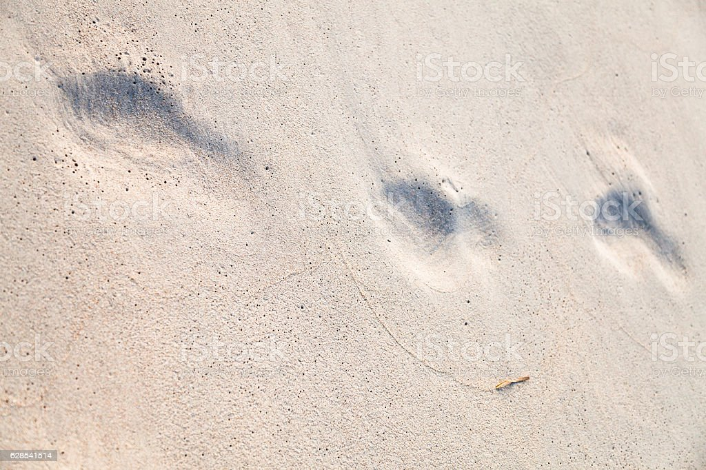 Footprints in the wet sand - ephemeral traces stock photo