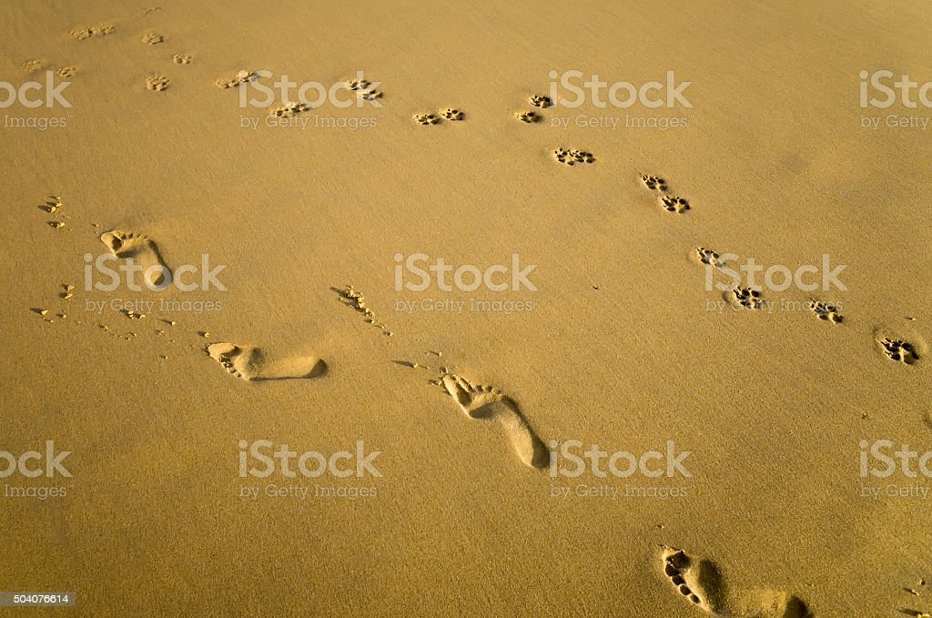 Footprints of a Woman and a Dog on Sand stock photo