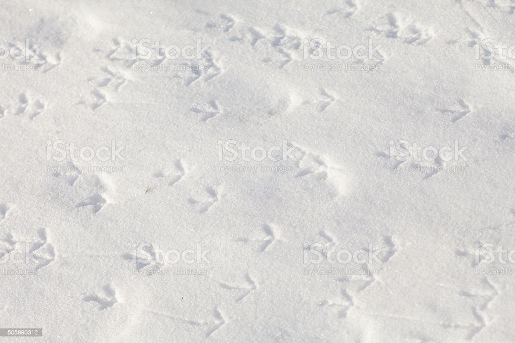 footprints of birds in the snow stock photo