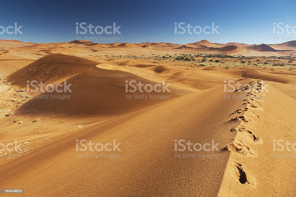 Footprints on sand dune royalty-free stock photo