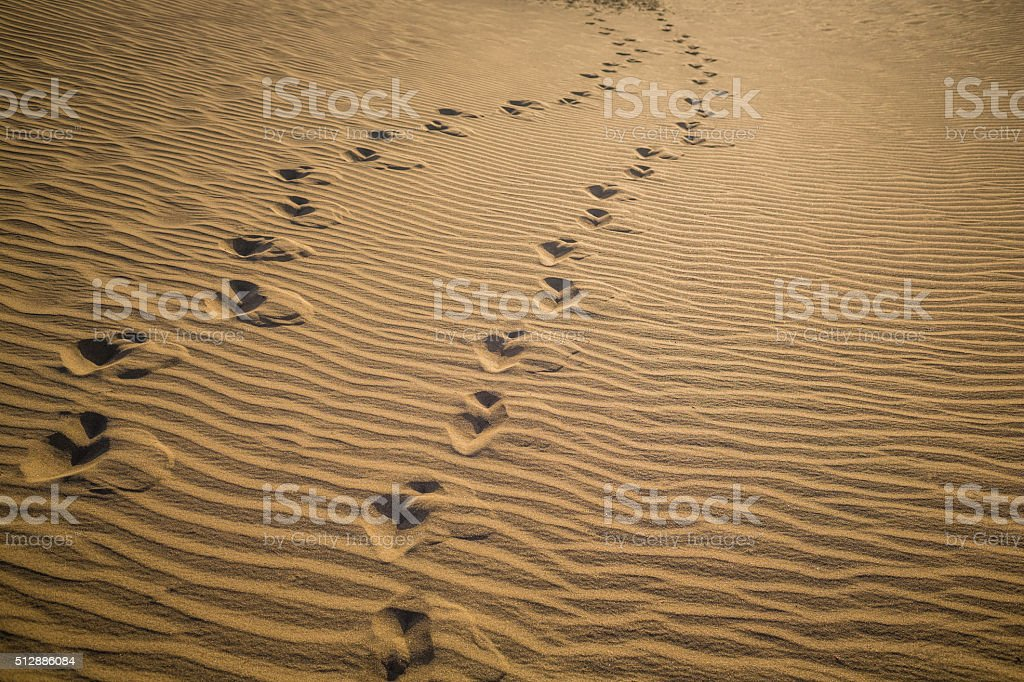 footprints on sand dunes stock photo