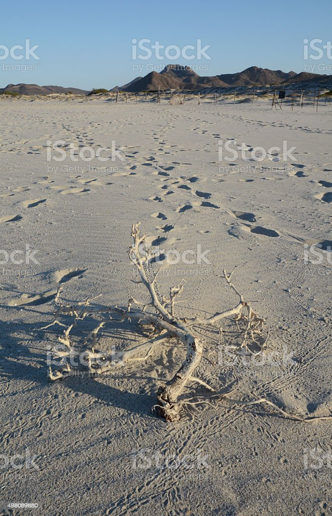 Footprints on the Beach in Cabo Pulmo royalty-free stock photo