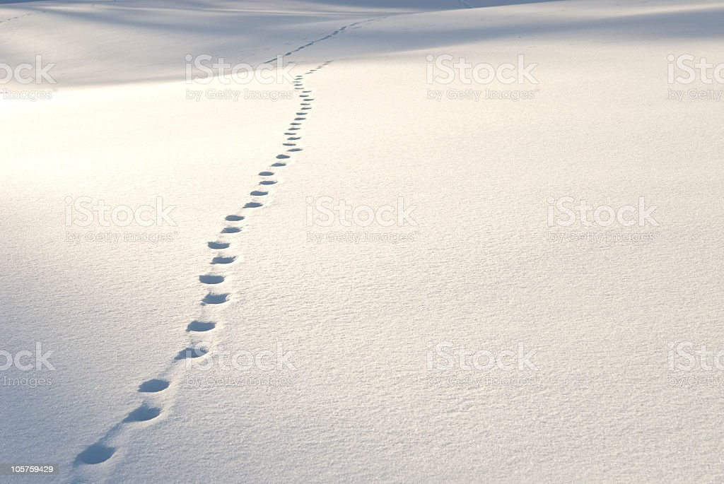 Footsteps in the snow stock photo